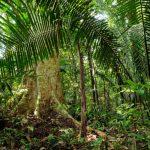 A terra é dom de Deus e responsabilidade humana, diz dom Vital sobre ocorrido em Xinguara